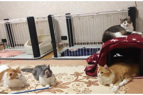 猫舎1枚目