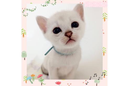 販売中の東京都のその他の猫種の1枚目