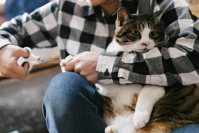 猫に爪切りって必要?どこまで切ればいい?頻度や嫌がる場合の対処も
