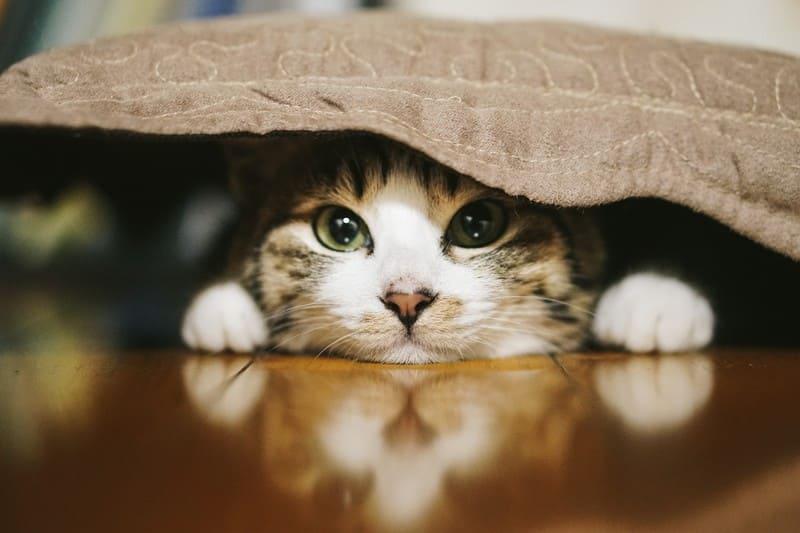 猫 一人暮らし