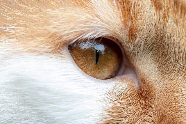 猫の視力は悪い?見え方や距離