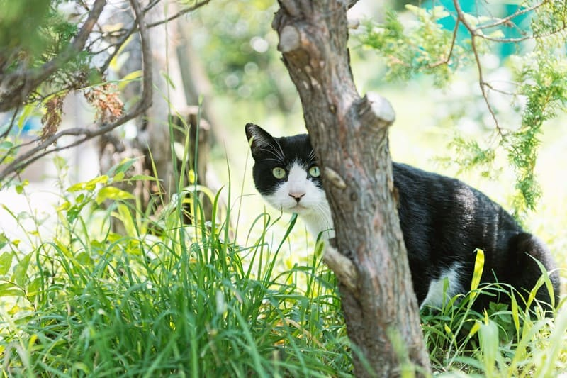 猫がキュウリに驚くのは?飛び跳ねたりすりすりする理由