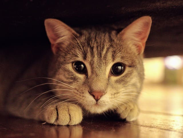 猫の目の色は?瞳孔や色が変化する仕組み